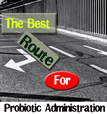 probiotic administration