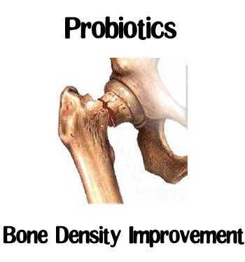 probiotic-bone-density